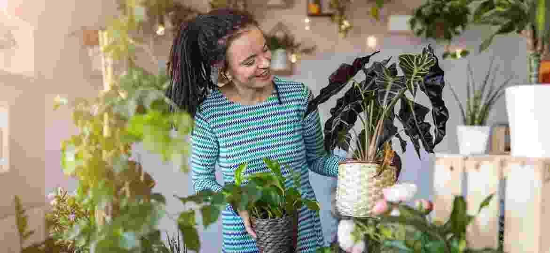 Cuidar das plantas é uma terapia, e algumas dicas de como organizar as verdinhas ajudam nessa tarefa - iStockphoto