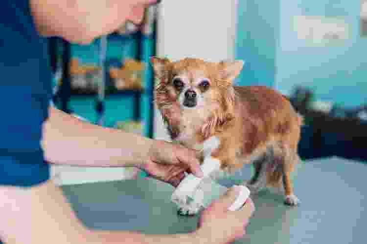 Não tente cuidar do bicho do pé sozinho e procure o auxílio de um veterinário - Getty Images - Getty Images