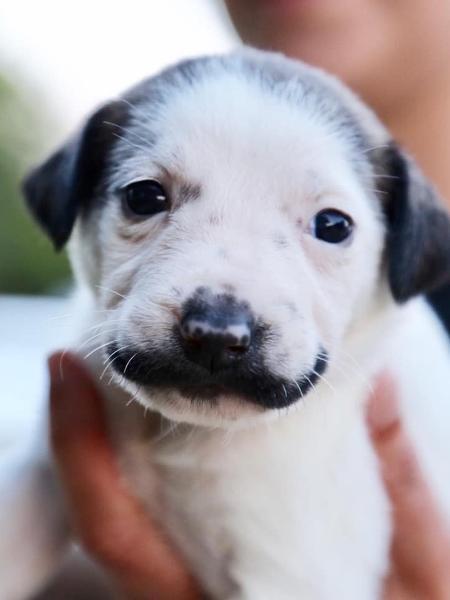 Cachorrinho sósia de Salvador Dali é usado para campanha de adoção - Hearts and Bones Rescue/Facebook