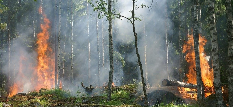 Floresta pegando fogo - Divulgação