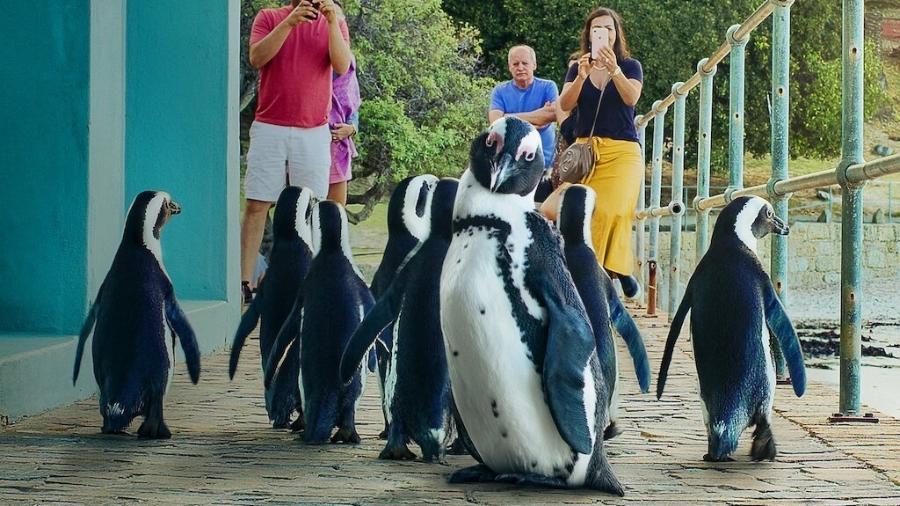 """""""Cidade dos Pinguins"""", da Netflix - Divulgação"""