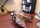 Já pensou em dar um avião ou tanque de guerra para seu gato? Veja como (Foto: Reprodução/suck.uk.com)