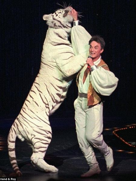 Roy Horn com o tigre Mantacore - Divulgação