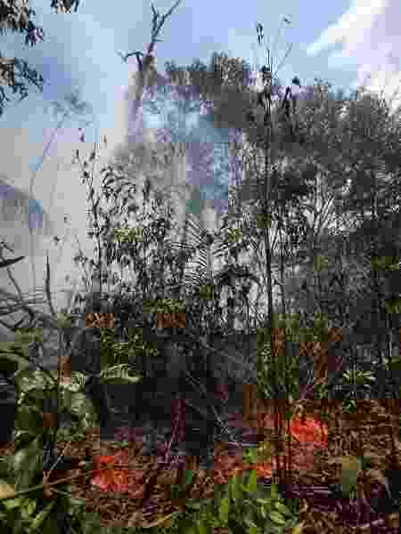 Queimada na floresta amazônica em Novo Airão (AM) em agosto de 2019 - Márcio Melo /Folhapress