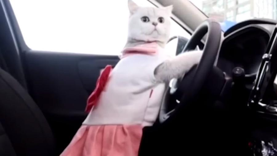 Gata viraliza por posar em carros - Reprodução