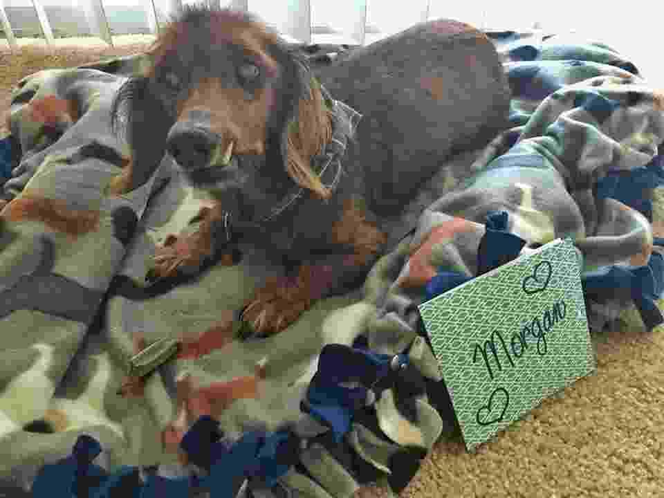 Resgatado aos 18 anos, Morgan ganhou uma casa. O carinho pelo cãozinho é tão grande que ele também foi a inspiração para uma lista de desejos - Reprodução/Facebook