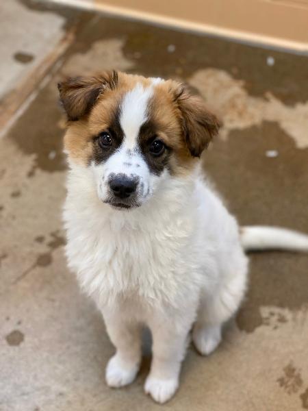 Abrigos pedem que população aproveite a quarentena para adotar pets - Reprodução/Twitter @SFAnimalShelter