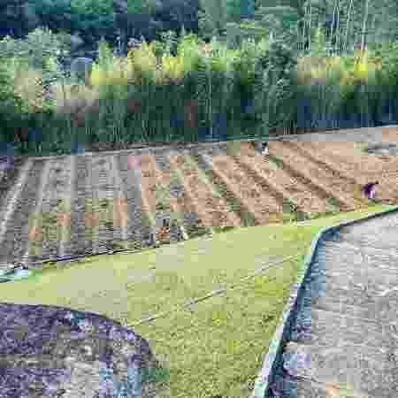 Bela Gil transformou o campo de futebol da casa dos pais em Petrópolis em uma agrofloresta - Arquivo pessoal