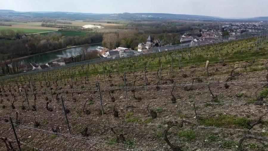 Vinícola em Champagne, na França - REUTERS/Pascal Rossignol