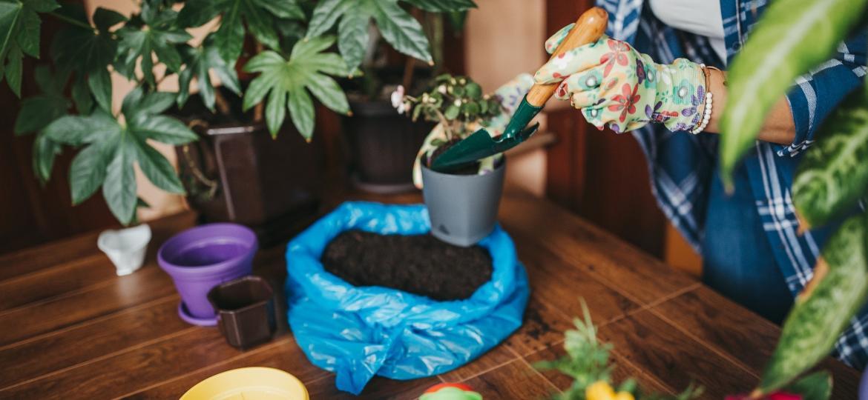 Qual adubo é o ideal para suas plantas? Descubra tipos e o melhor período para adubagem - Getty Images/iStockphoto