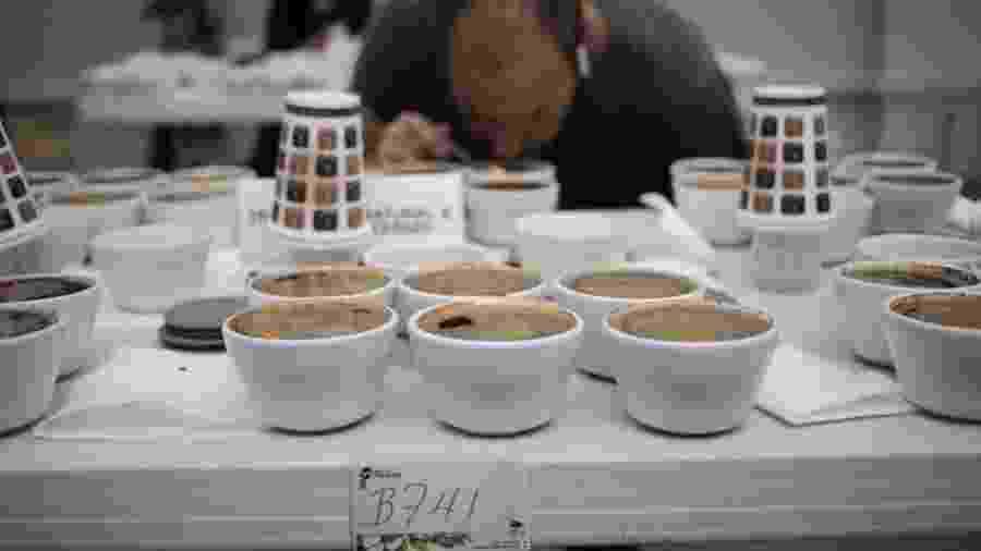 """Um jurado examina os cafés participantes da competição """"The Best of Panama"""" - Alamy"""