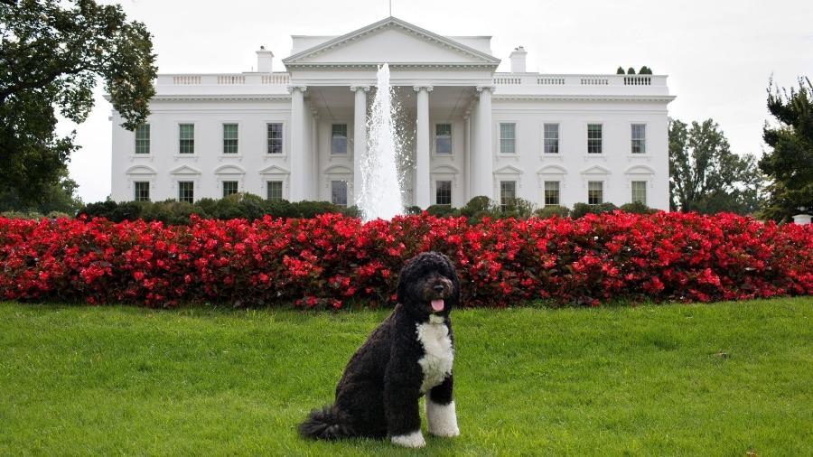 """Bo, cão d""""água português, foi o cachorro de estimação da família do 44º presidente dos Estados Unidos - AFP"""