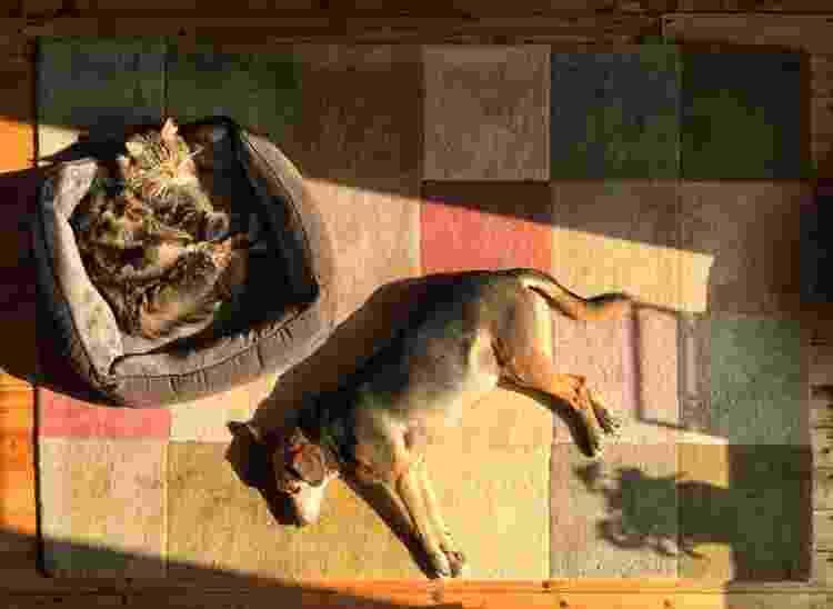 Solzinho faz bem para os pets, mas deve ser controlado também no inverno - Tristan Manchester / EyeEm - Tristan Manchester / EyeEm