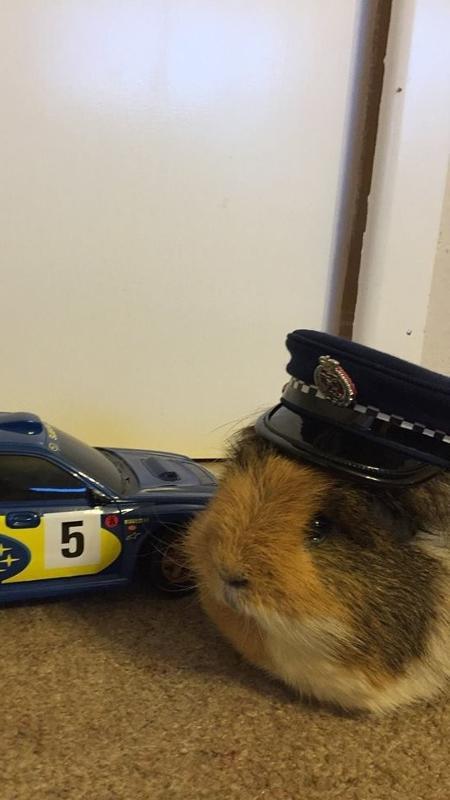 O mascote da polícia neozelandesa faz sucesso no Facebook - Reprodução/Facebook