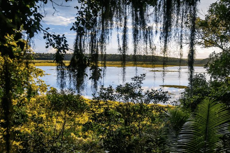 A Lagoa do Macuco, vista de cima de um dos mirantes cobertos pela floresta - Leonardo Merçon - Leonardo Merçon