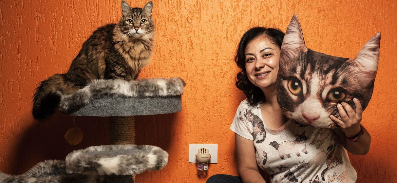 Um dos seis gatos de Denise ao lado do difusor de feromômios - Fernando Moraes/UOL