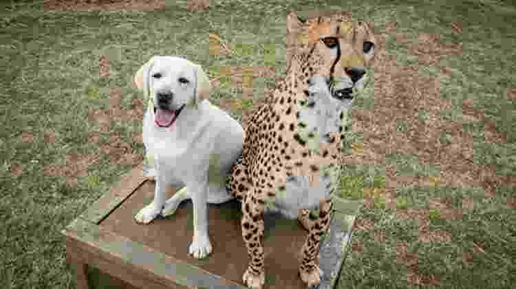 cheetah e cachorro no Columbus Zoo, nos EUA - Reprodução/Columbus Zoo - Reprodução/Columbus Zoo