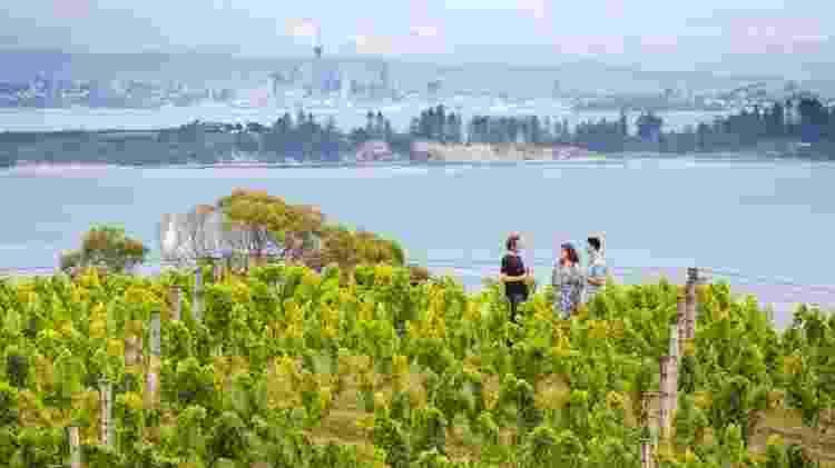 A ilha Waiheke é famosa pela produção de vinhos Cable Bay, Mudbrick e Tantalus - Divulgação