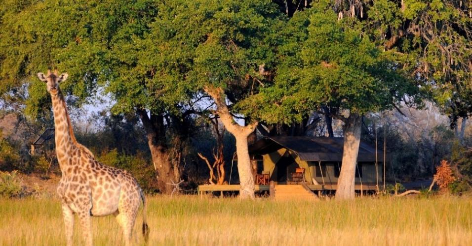 Botswana tem deserto, savanas, deltas de rios e mais. A riqueza de paisagens torna a viagem única e repleta de experiências.