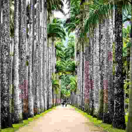 O estudo conta com a participação de pesquisadores de 42 países, incluindo do Jardim Botânico do Rio de Janeiro (foto) - Getty Images