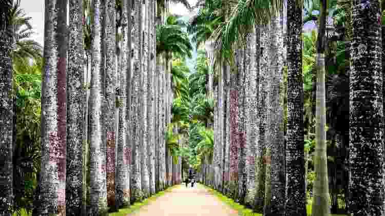 Jardim Botânico do Rio de Janeiro - Getty Images - Getty Images