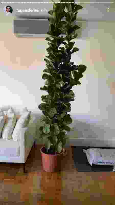 Ficus-lira no apartamento de Fernanda Paes Leme - Reprodução - Reprodução