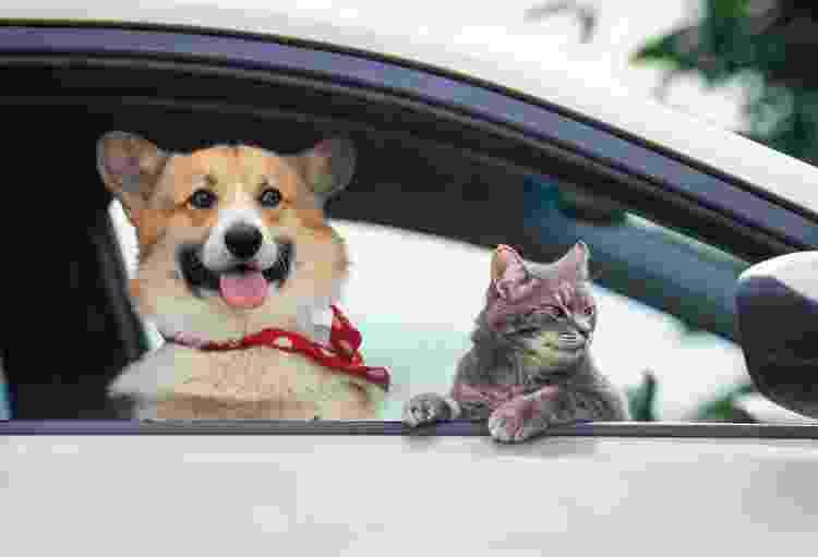Seja cão ou gato, dá para viajar com seu bichinho - Getty Images/iStockphoto - Getty Images/iStockphoto