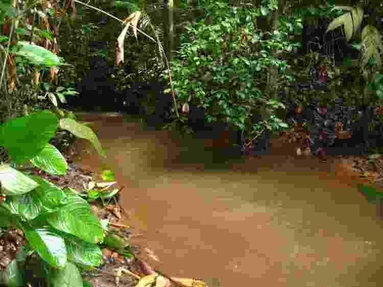 Os pequenos cursos d?água da região da Calha Norte levam a afluentes do Rio Amazonas e guardam espécies de peixes que agora começam a ser estudadas - Thiago Freitas - Thiago Freitas