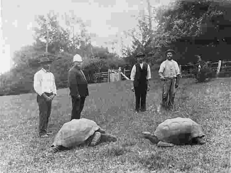 Foto datada entre 1882 e 1886, logo após Jonathan chegar na ilha de Santa Helena - Reprodução/Guinness World Records - Reprodução/Guinness World Records