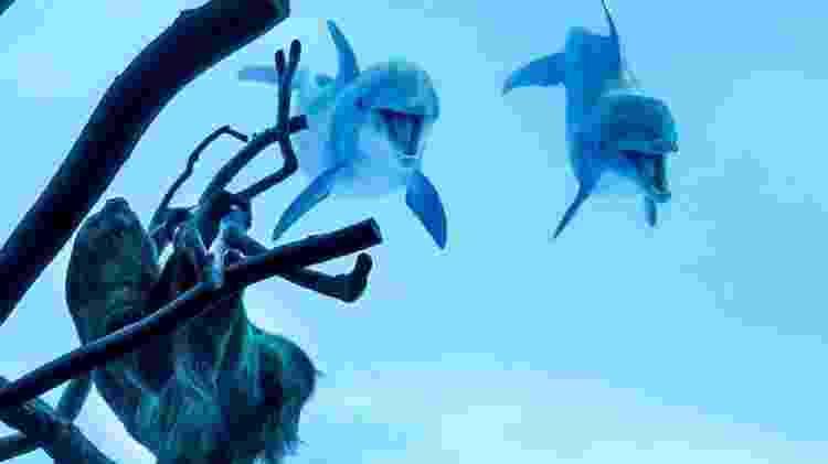 Golfinhos bicho-preguiça - Texas State Aquarium - Texas State Aquarium