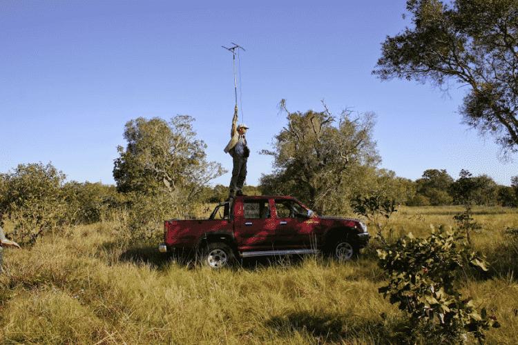 Para localizar e monitorar o tatu-canastra, os pesquisadores do projeto usam aparelhos de radiotelemetria - Projeto Tatu-Canastra/divulgação - Projeto Tatu-Canastra/divulgação