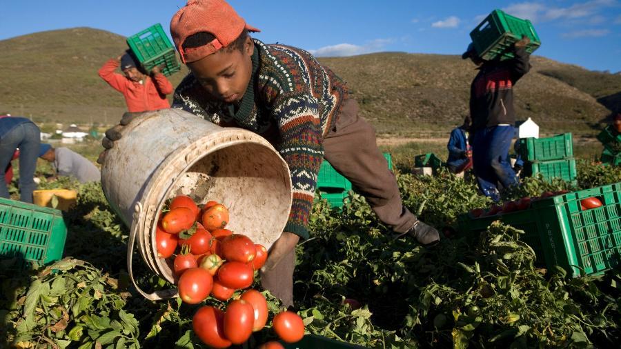 Criança trabalha na colheita de tomates em grupo de trabalhadores rurais em foto tirada na África do Sul - Gideon Mendel/Corbis via Getty Images