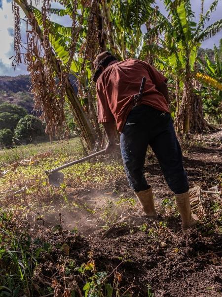 Agricultura familiar é solução para soberania alimentar no Brasil - GENILSON ARAÚJO/FETAPE