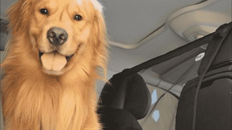 Rede proteção pets carro bancos dianteiros - Divulgação - Divulgação