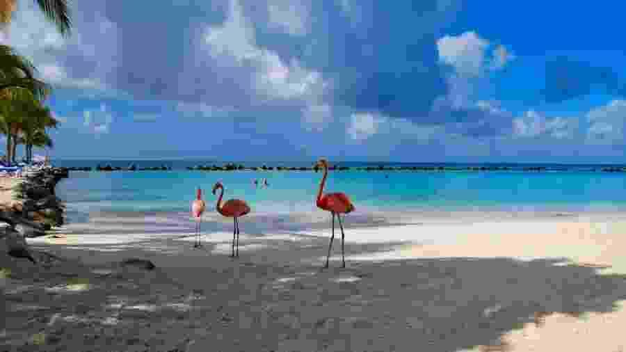 O flamingo é a ave oficial das Bahamas, por isso um cargo tão especial... - Getty Images
