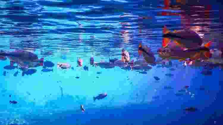 90% do turismo em Bonito está relacionado a atividades aquáticas  - Thiago Santos/istock - Thiago Santos/istock