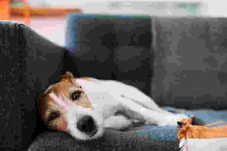 Coronavírus e cinomose são doenças que apavoram tutores e pets no inverno - Getty Images - Getty Images