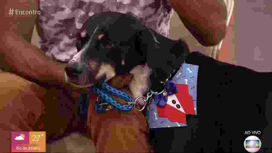 O cachorro Ted encantou os participantes do Encontro ao não desgrudar do dono, Paulo - Reprodução/Globo