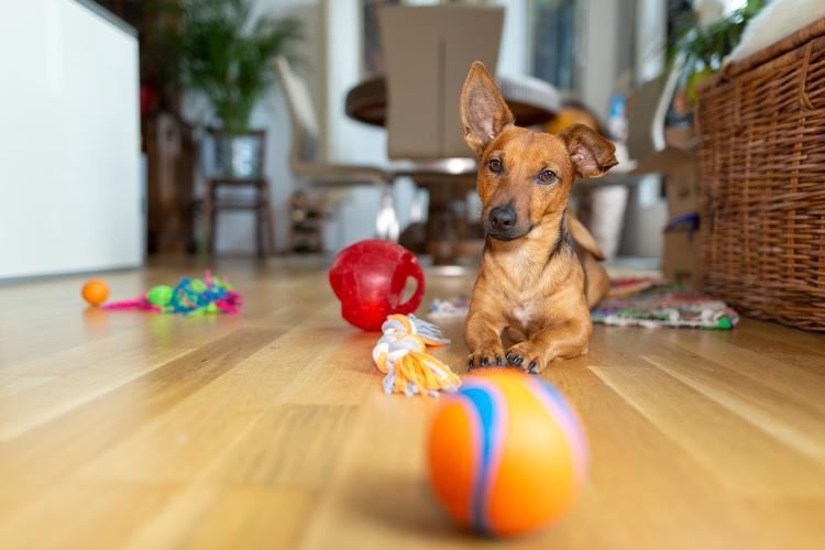 A ideia não é levar o cãozinho à exaustão. Equilíbrio! - Getty Images/iStockphoto - Getty Images/iStockphoto