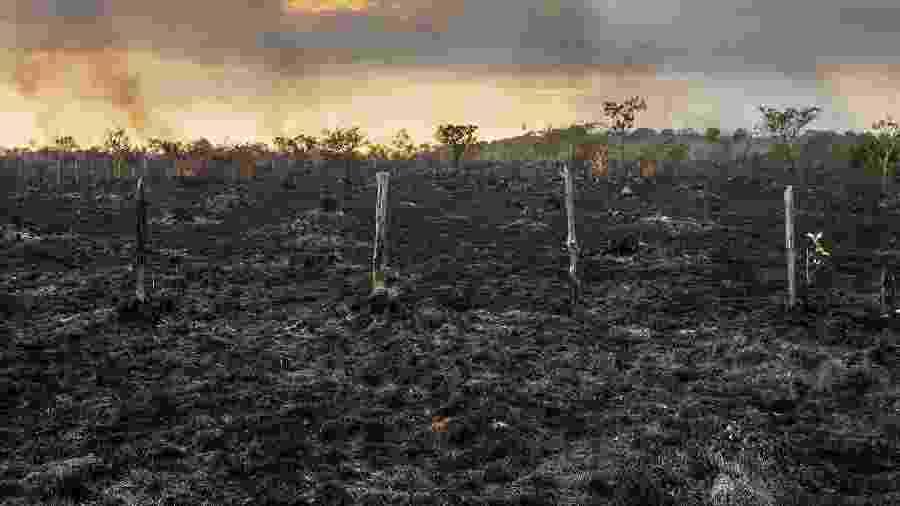 Área de pasto queimado as margens da Br-319 próximo a Humaitá, no Amazonas - Lalo de Almeida/Folhapress