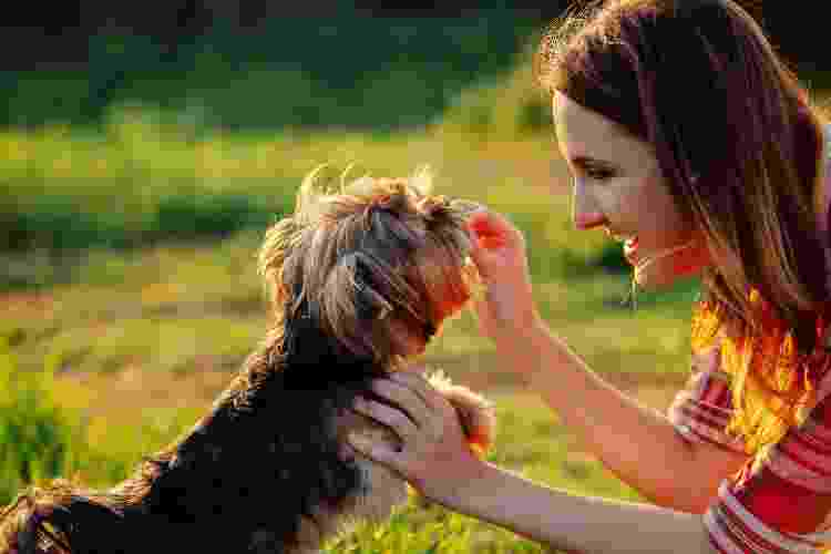 Cachorro ganha petisco em adestramento - Getty Images/iStockphoto - Getty Images/iStockphoto