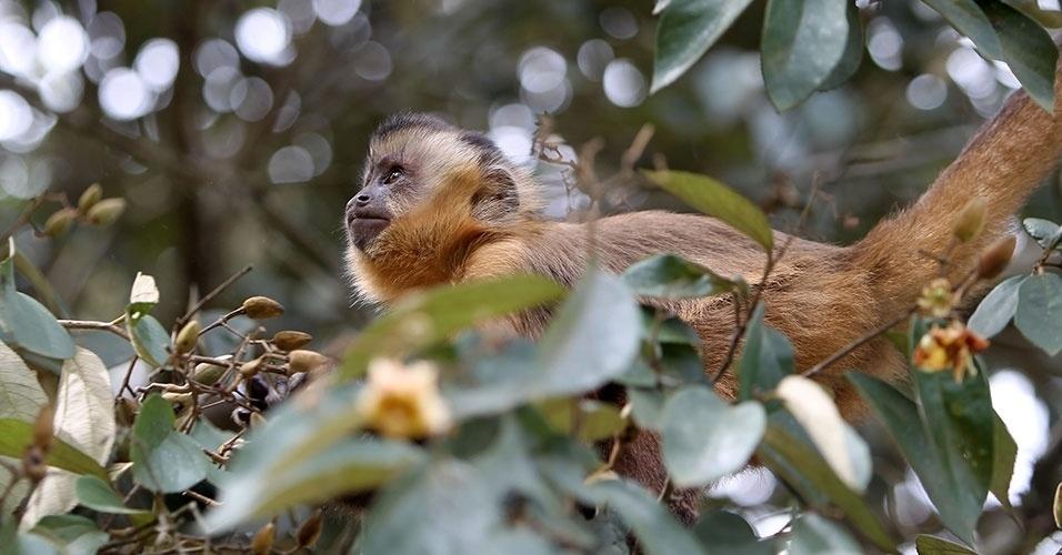 No Parque Nacional de Brasília, se destacam ipês roxos e amarelos, pequis, canelas-de-ema e veredas de buritis, árvores freqüentadas por macacos-prego e por aves endêmicas desta região do cerrado, como o soldadinho