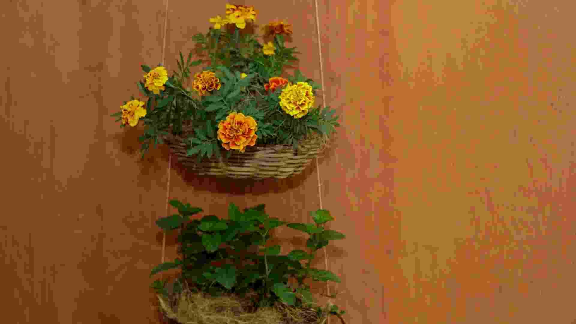 Passo a passo: floreira com cestos de vime - Fernando Donasci/ UOL