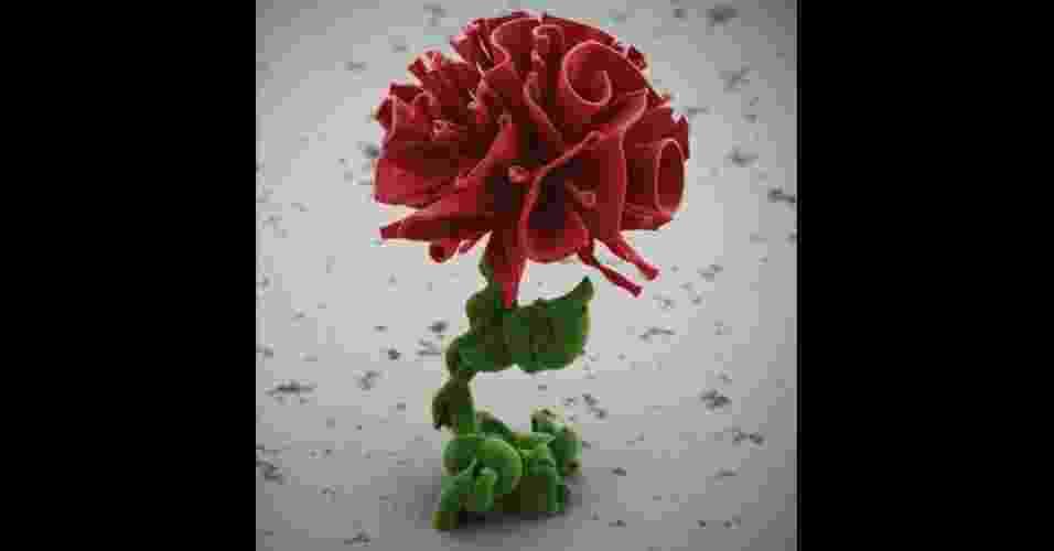 Um cientista aprendeu a manipular gradientes químicos para criar estruturas microscópicas semelhantes a flores. (Imagem da BBC, usar apenas no respectivo material) - Wim L Noorduim/SEAS
