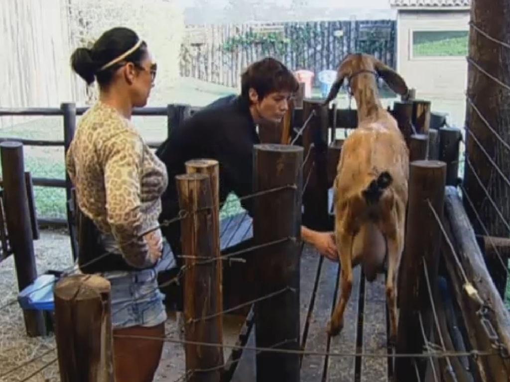 28.jun.2013 - Lu Schievano tem dificuldades para tirar leite das cabras e recebe ajuda de Scheila Carvalho