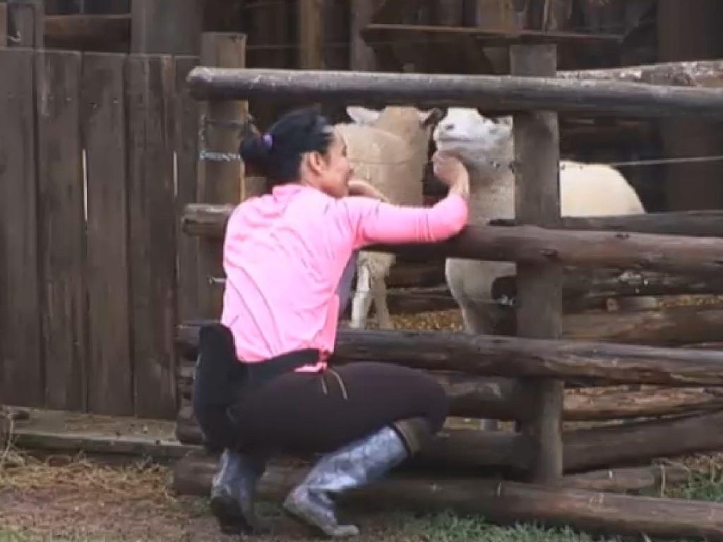 30.jun.2013 - Scheila brinca com as ovelhas na tarde deste domingo