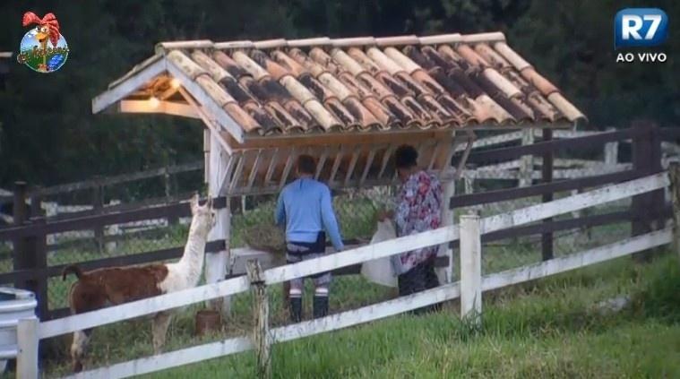 01.jul.2013 - Paulo Nunes ensina Gominho a tratar das lhamas