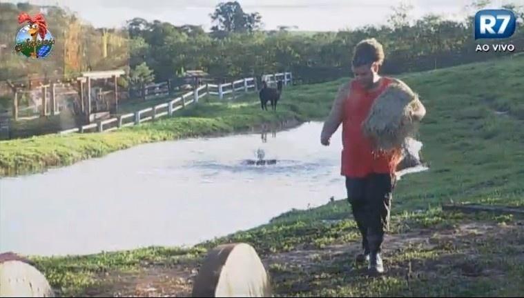 02.jul.2013 - Gominho trata das lhamas na manhã ensolarada na