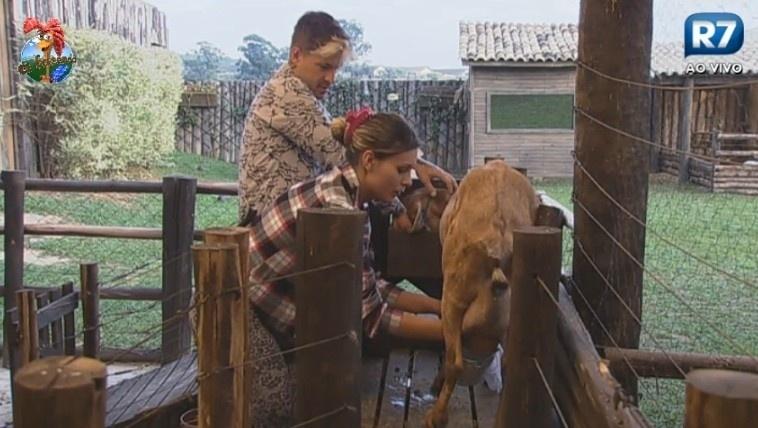 08.jul-2013 - Mesmo com ajuda de Mateus, Andressa tem dificuldade de tirar o leite da cabra