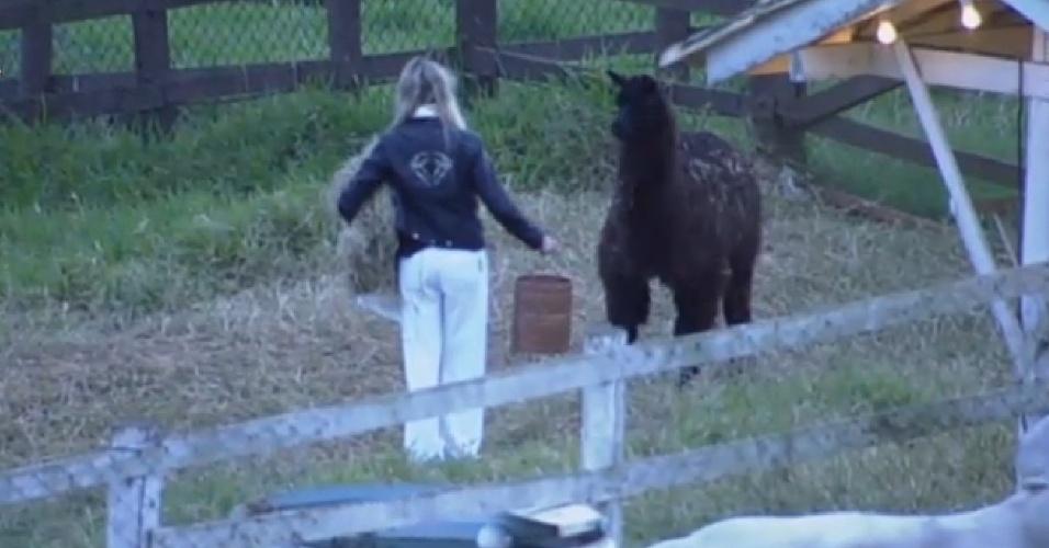 9.jul.2013 -  Sem botas, Bárbara Evans tenta guiar a lhama até o cercado, mas o animal consegue escapar por alguns minutos.